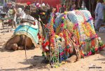 Chandrabhaga Fair 2017 from Next Week in Jhalawar